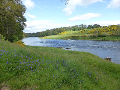 Salmon Fishing Scotland Tay, Perthshire Report for W/E 21st May 2016.