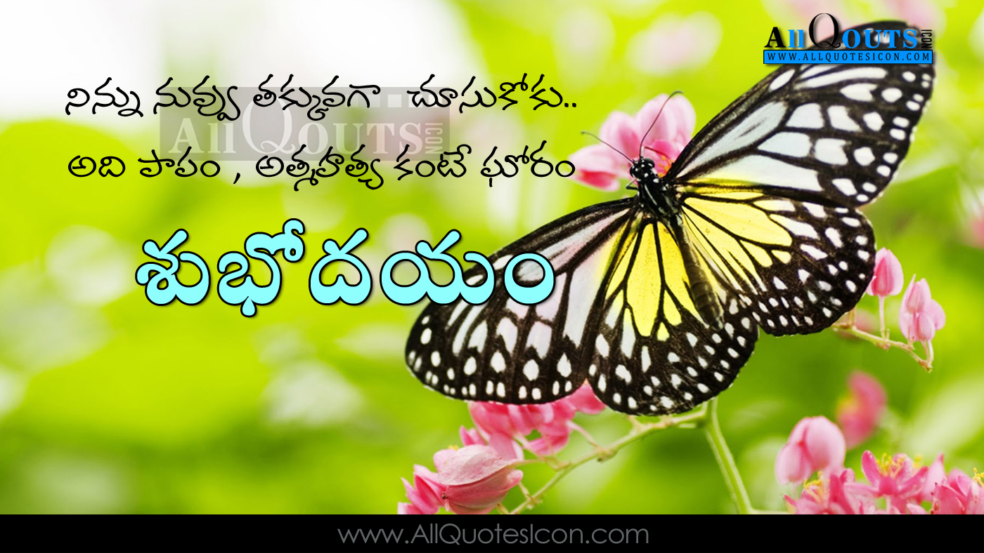 Good Morning Quotes Greetings In Telugu Hd Pictures Butterfly Images