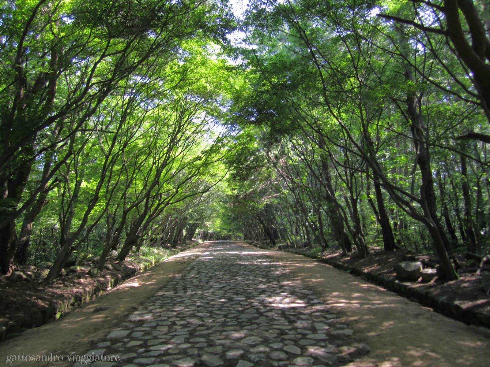 Sentiero per Seokguram Grotto