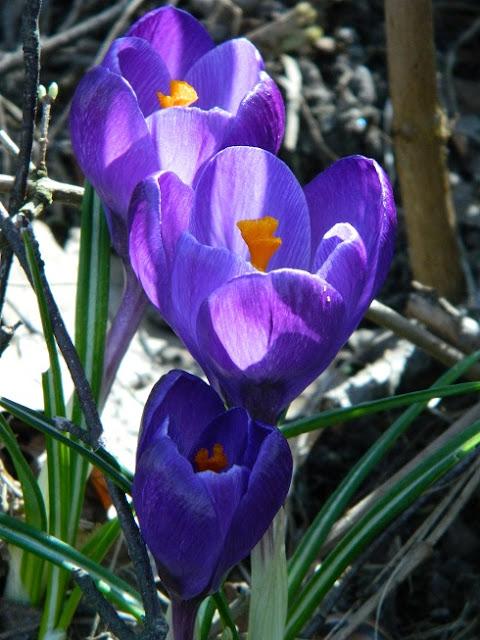 slow life, przyroda w kwietniu