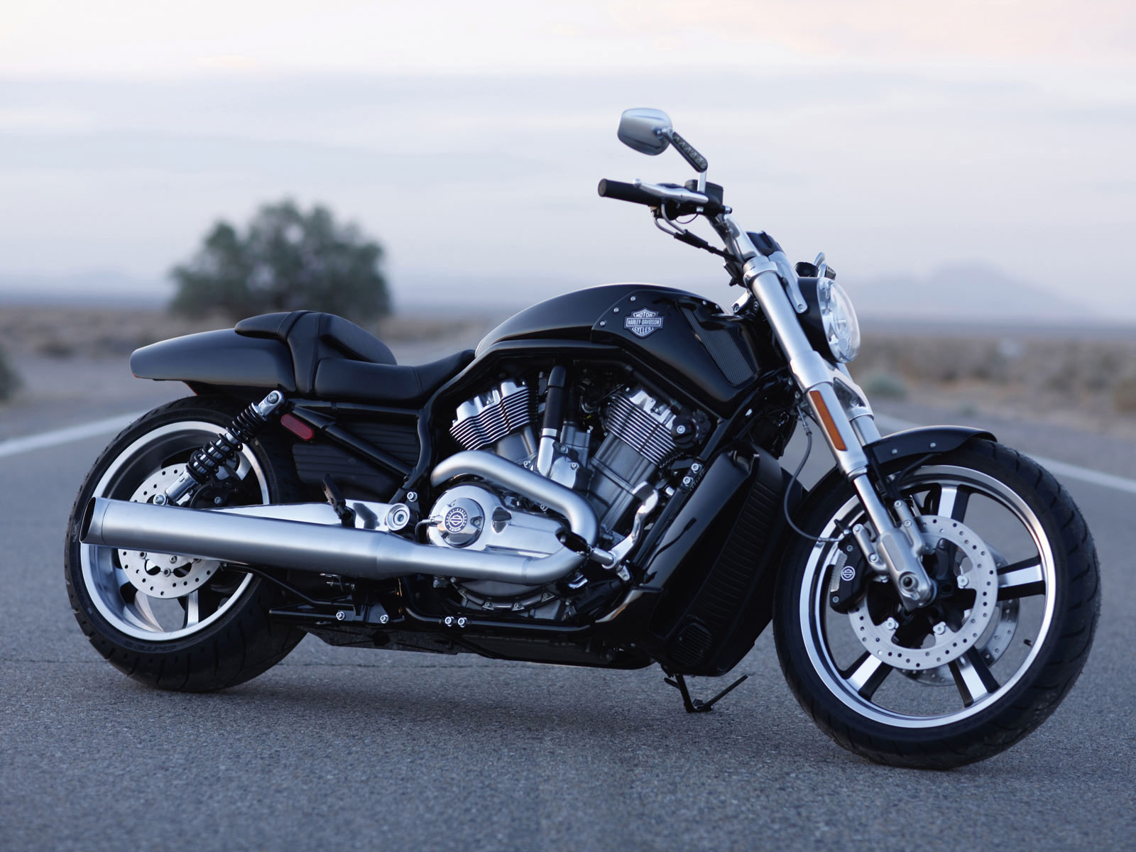 Harley Davidson: HARLEY-DAVIDSON VRSCF V-Rod Muscle (2010) Pictures And Review