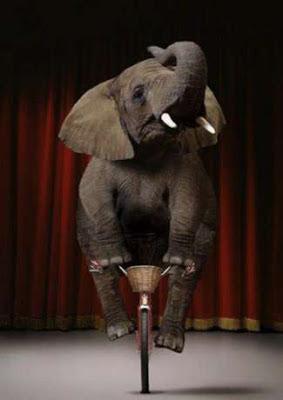 Lustige Bilder Tiere - Elefant auf Fahrrad