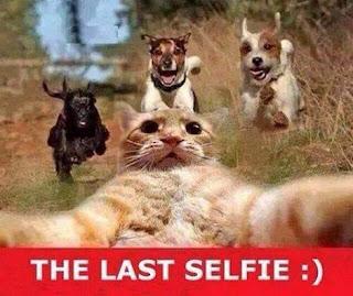 Foto em dia de sol em um terreno vazio com capim alto, um gato amarelo do peito para cima com as patas dianteiras abertas a frente e levemente inclinado para trás, com olhos arregalados, mira a lente da câmera. Atrás, na direção do gato, três cachorros com a boca aberta correm em disparada. No rodapé, inserido em uma faixa vermelha, escrito em letras maiúsculas brancas: The last selfie, dois pontos e fecha parênteses.(Símbolo da carinha sorridente)