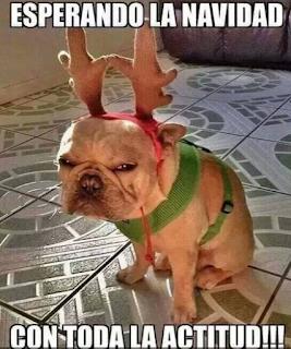 Imágenes graciosas de navidad