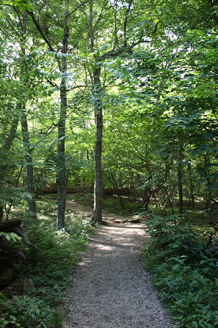 Wooded path in Shenandoah Valley