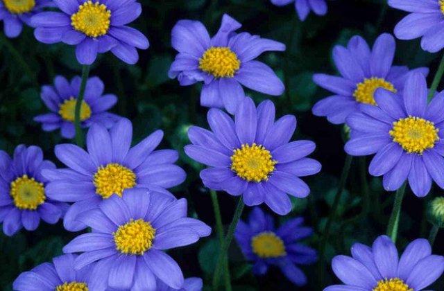 Names Of Purple Flowers