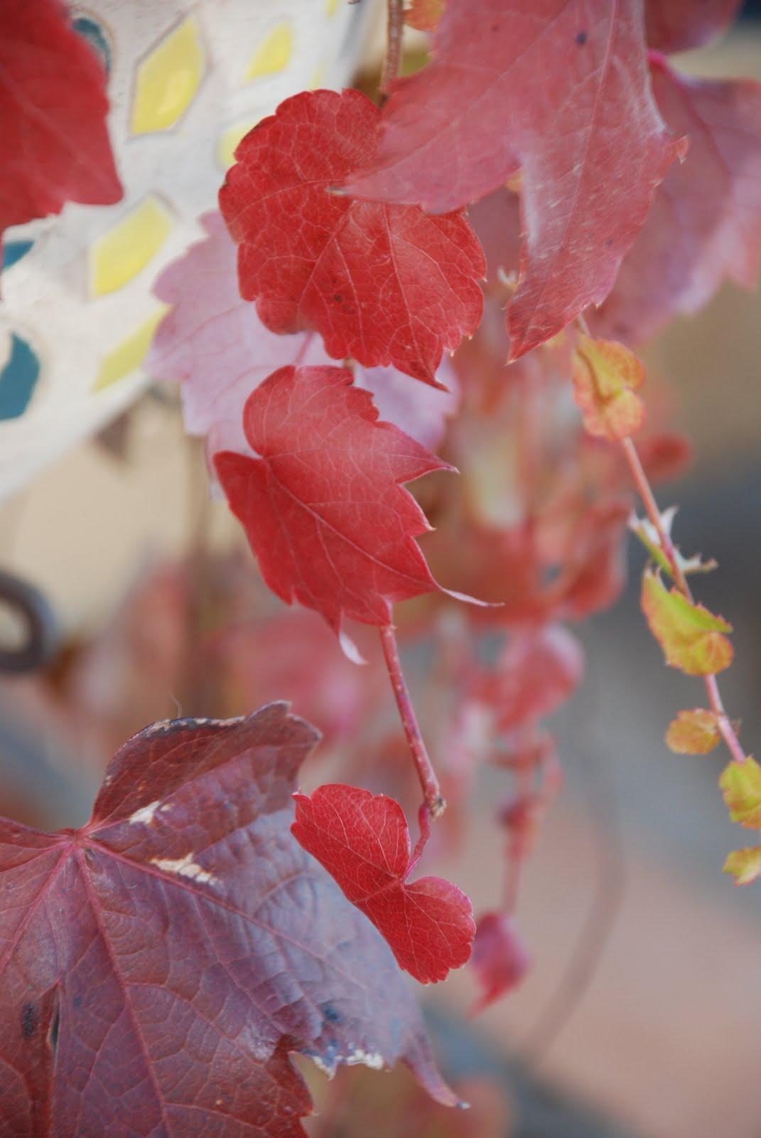 El Mundo de Rayén: Hojas de colores