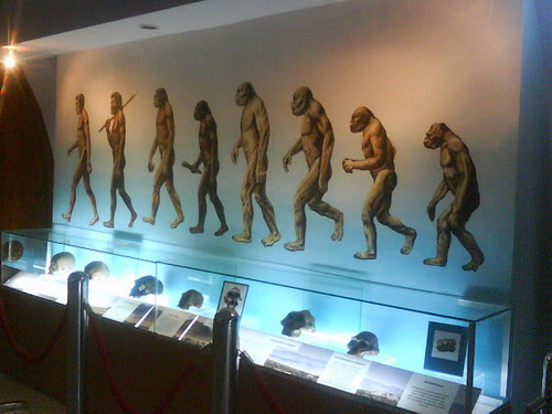 Tinuku Travel Sangiran Museum and paleo sites displaying early human Pithecanthropus erectus and variety ancient life