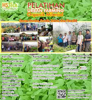 Pelatihan pertanain organik Milenial URBANG FARMING