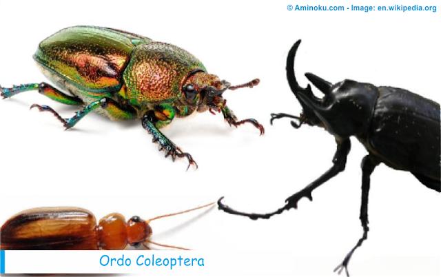 Fakta unik tentang kumbang