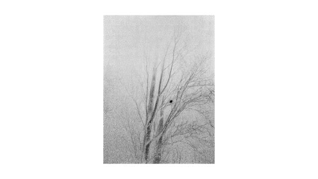 Anthurus d'Archer - Mémoires souterraines