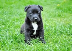 Male Dog Names-D