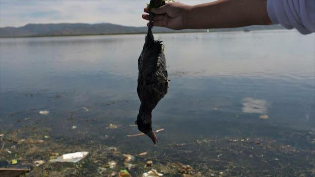 ONU: Gran parte de naturaleza está perdida y el resto en declive