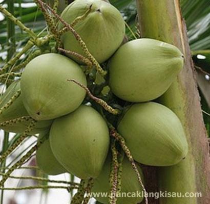Air kelapa untuk kesehatan