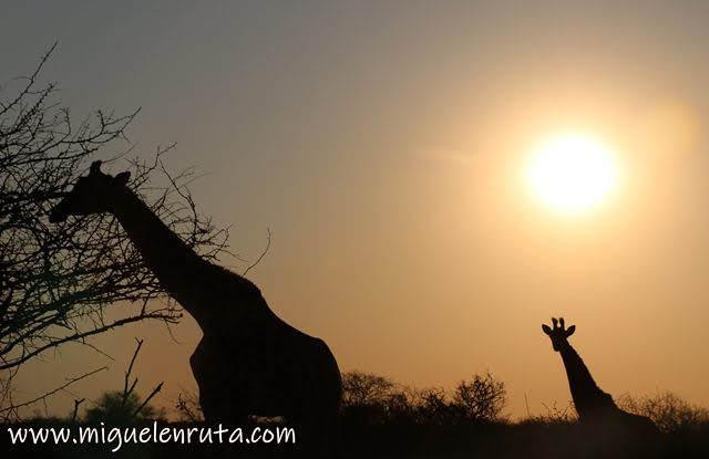 Sunset-Lower-Sabie-Kruger-National-Park