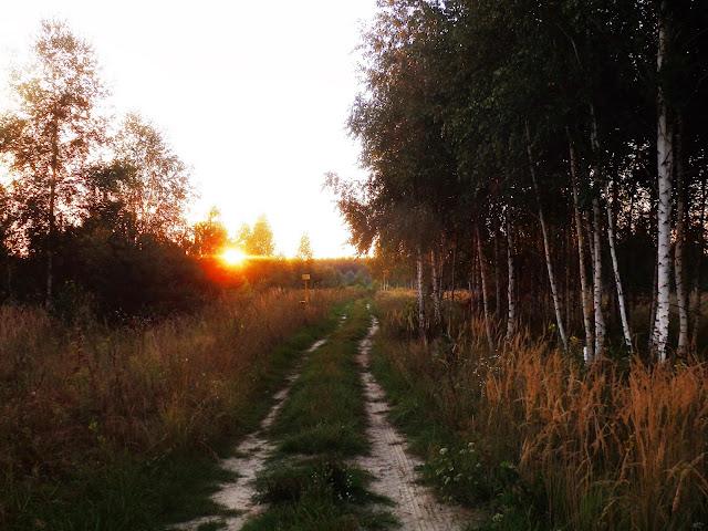 Brzozowy zagajnik gdzieś w Rosji, niedaleko granicy z Ukrainą