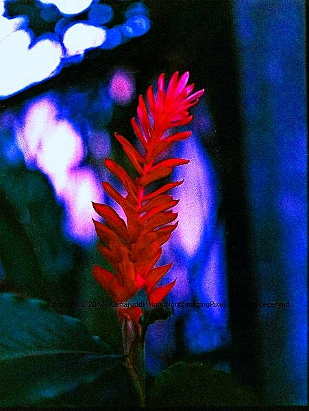 Analog Diary: Images On Expired Film #1, Image 05
