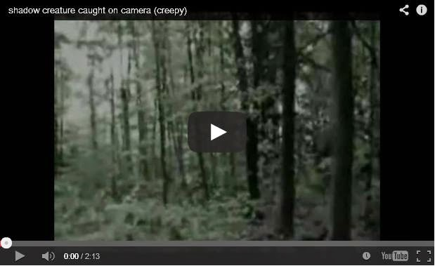 العثور على كاميرا تحتوي شريط فيديو مُخيف في غابة ومصير المصور مجهول