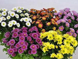 Manfaat Plastik Uv - Ini Beliau Flora Bunga Yang Cocok Untuk Hiasan Pekarangan Rumah