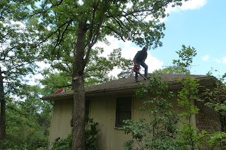 tree trimming 1