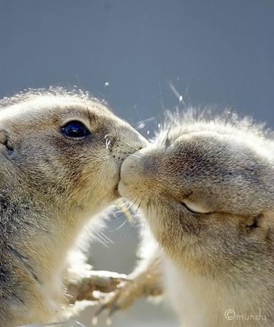 gifs de ardillas besándose