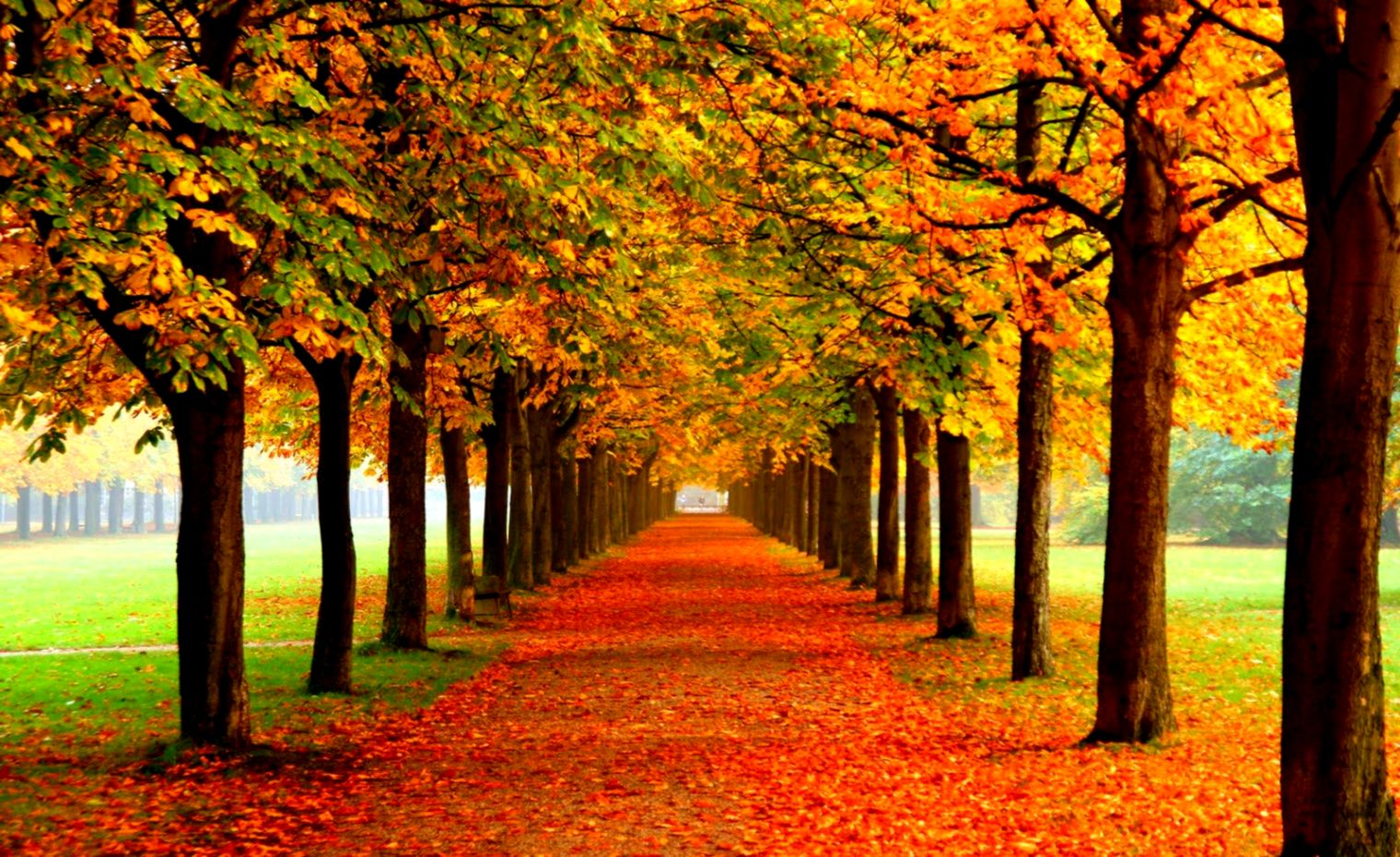 Autumn Foliage Fall Hd Wallpaper Wallpapers Image