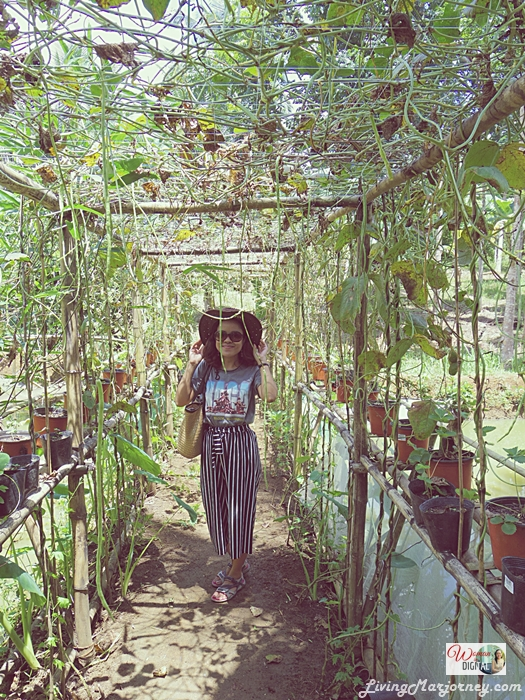 WomanInDigital-Kalikasan-Organic-Farm-Albay