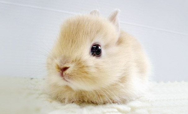 Baby Animals: Bunny
