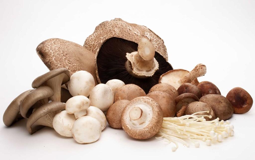 Jenis Jamur Untuk Meningkatkan Kepadatan Tulang