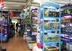 Sentra Penjualan Grosir Aneka Ikan Hias dan Perlengkapan Akuarium Termurah