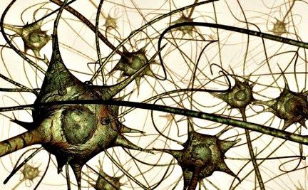 Se pueden fortalecer las neuronas para evitar que mueran