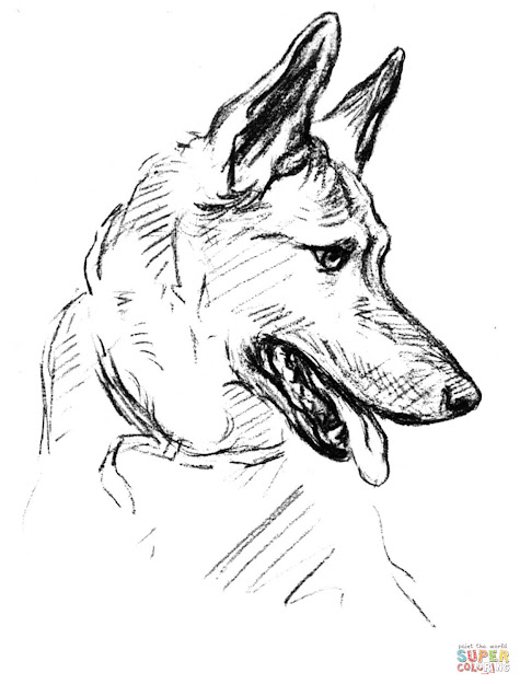 Click The German Shepherd Dog Portrait Coloring