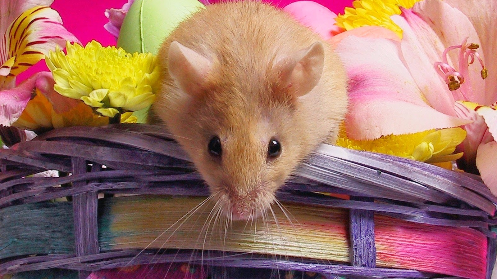 Cute Dreamcatcher Wallpaper Hamster Wallpapers Hd Beautiful Wallpapers Collection 2014