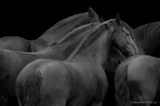 corceles-fantasticas-fotografias