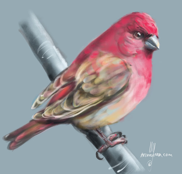 Rosefinch bird painting by Artmagenta