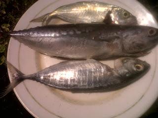 Ikan Tuna, Tude dan Deho