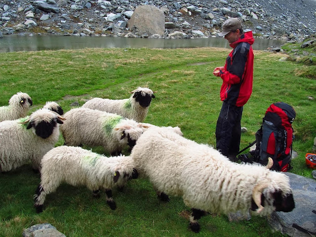 owce pod Pfulwe