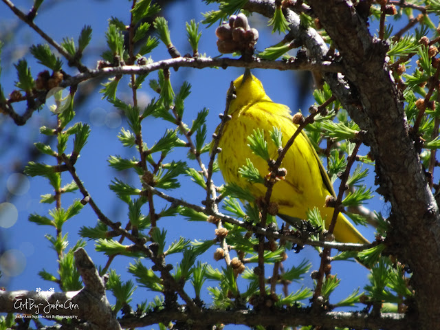 Small Yellow Bird