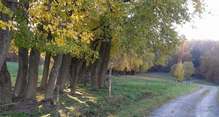 Oktoberfreuden Herbstlaub