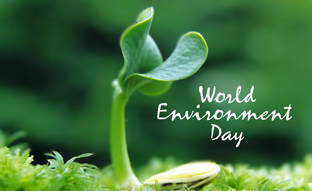 world environment day 2017 theme and slogan