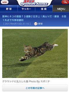 スポーツニッポンカメラマン「ファッ!?猫や!」パシャ