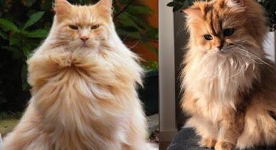 kedi tüy dökülme nedeni