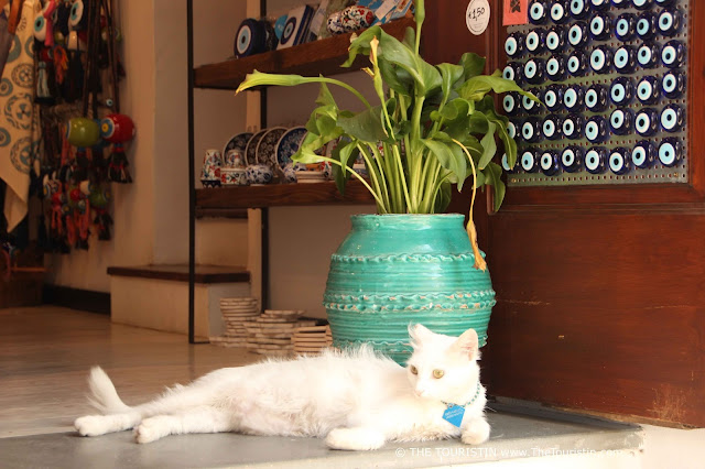 White cat lounging on the floor in the entrance of a shop.