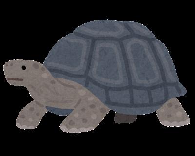 ゾウガメのイラスト