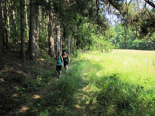 Wzdłuż małego lasu.