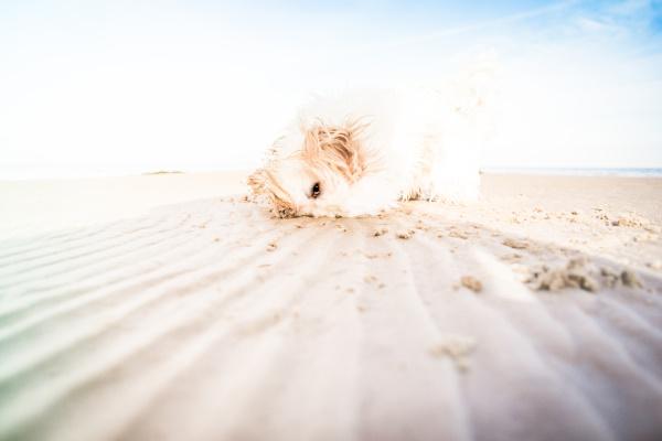 Glücklicher Hasso: Hundestrand an der Ostsee - traumhafter Spaziergang am Meer