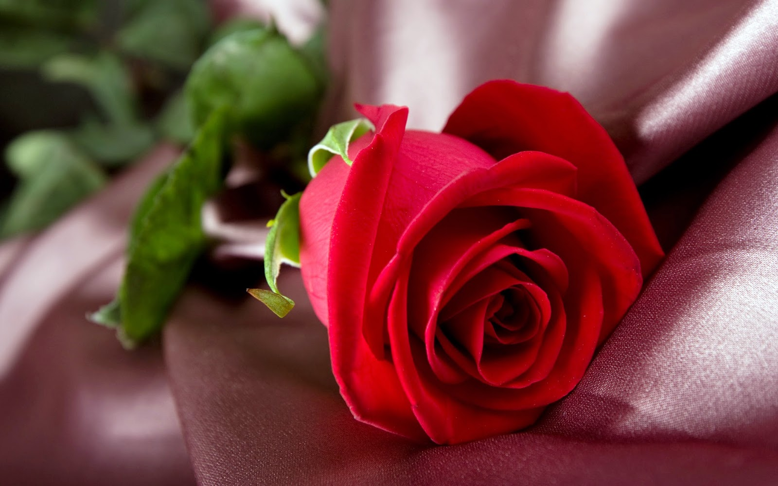 Red rose beautiful images - Red rose flower hd images ...