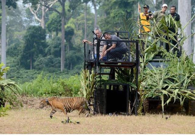 Panglima TNI : Hutan Miliki Fungsi Strategis Menunjang Kecakapan TNI