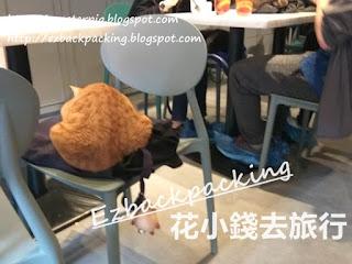 香港貓cafe