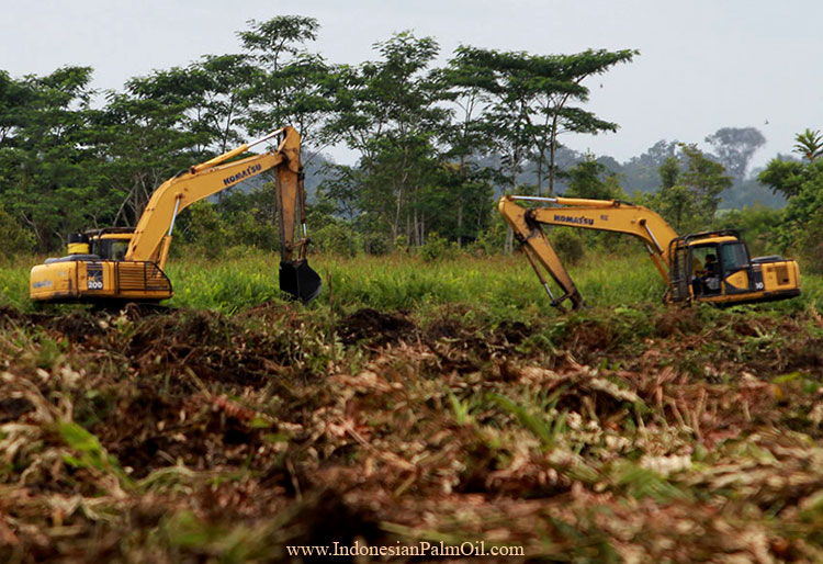 protests against oil palm expansion
